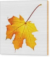 Fall Maple Leaf Wood Print