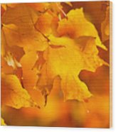 Fall Maple Leaves Wood Print