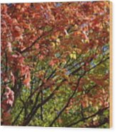 Fall Maples Green Gold Wood Print