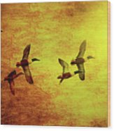 Fall Migration . Northern Shovelers . Texture . 40d5393 Wood Print