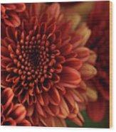 Fall Mum Macro Wood Print