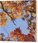 Fall Oak Leaves Up Above Wood Print