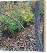 Fall On The Bike Trail Wood Print