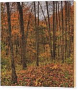 Fall On The Ice Age Trail Wood Print