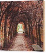 Fall Passage Wood Print