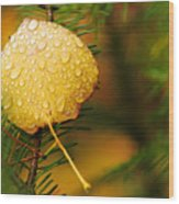 Fall Raindrops Wood Print