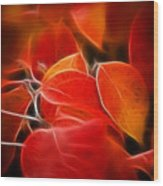 Fall Red 6675 Wood Print