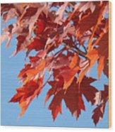 Fall Red Orange Leaves Blue Sky Baslee Troutman Wood Print