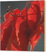 Fall Reds Wood Print
