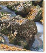 Fall Rushing Mountain Stream Wood Print