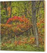 Fall Sumac Trees With Red Leaves In A Michigan Forest During Autumn Wood Print