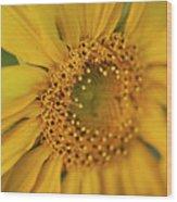 Fall Sunflower Avila, Ca Wood Print