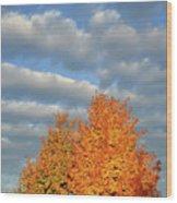 Fall Sunrise On Sugar Maple Along Route 31 Wood Print