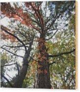 Fall Tall Wood Print