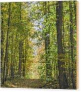 Fall Trail Wood Print