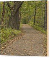 Fall Trail Scene 45 A Wood Print