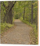 Fall Trail Scene 45 B Wood Print