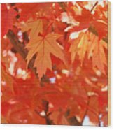 Fall Tree Art Autumn Leaves Red Orange Baslee Troutman Wood Print