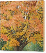 Fall Tree Art Print Autumn Leaves Wood Print