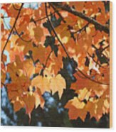 Fall Tree Art Prints Orange Autumn Leaves Baslee Troutman Wood Print