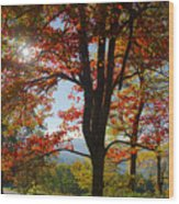 Fall Tree Colors I Wood Print