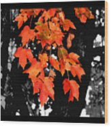 Fall Tree Wood Print by Karen M Scovill