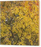 Fall Tree Leaves 2 Wood Print
