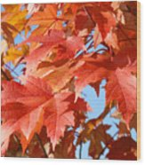 Fall Tree Leaves Art Prints Blue Sky Autumn Baslee Troutman Wood Print