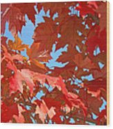 Fall Tree Leaves Red Orange Autumn Leaves Blue Sky Wood Print