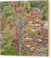Fall Tree With Intense Colors Wood Print