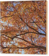 Fall Tree With Star Burst Wood Print