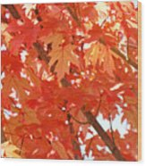 Fall Trees Colorful Autumn Leaves Art Baslee Troutman Wood Print
