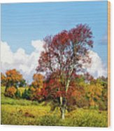 Fall Trees In Country Field Wood Print