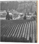 Vineyard In Black And White Wood Print