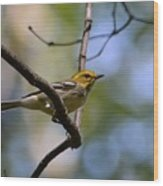 Fall Warbler Wood Print