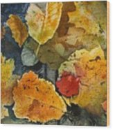Fallen Wood Print by Elizabeth Carr