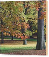 Fallen Leaves II Wood Print
