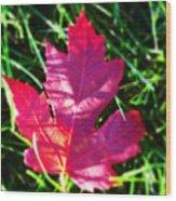 Fallen Maple Leaf Wood Print