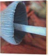 Fallen Mushroom Wood Print
