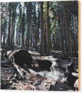 Fallen Sequoia Crescent Meadow Trail Wood Print