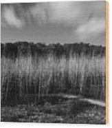 Fallen Timbers Battlefield Wood Print