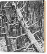 Fallen Tree And Snow Wood Print