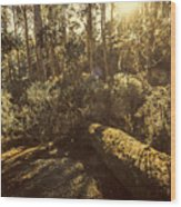 Fallen Tree In Foliage Wood Print