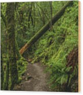 Fallen Tree On The Trail Wood Print