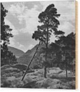 Fallen Tree Wood Print
