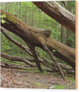 Fallen Trees Wood Print