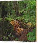 Fallen Trunk Wood Print