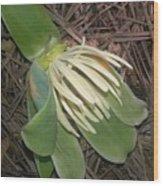 Fallen Tulip Wood Print