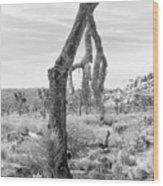 Falling Joshua Tree Branch Wood Print
