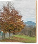 Falling Leaves In Silo Park Wood Print